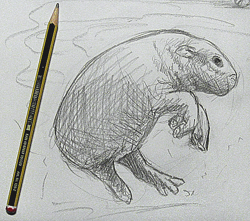 Guide Learn To Draw Animals
