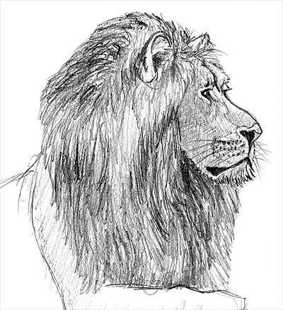 drawing a lion with pencil