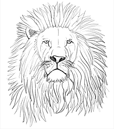 Draw the mane of a lion