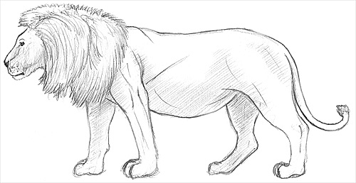 to Draw a Lion