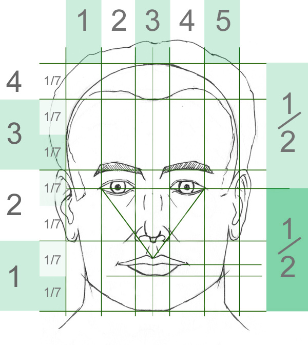 Division of a face to draw a portrait
